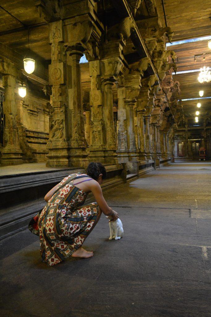 interno del tempio induista Sri Ponnambalam Vanesar Kovil con il gatto