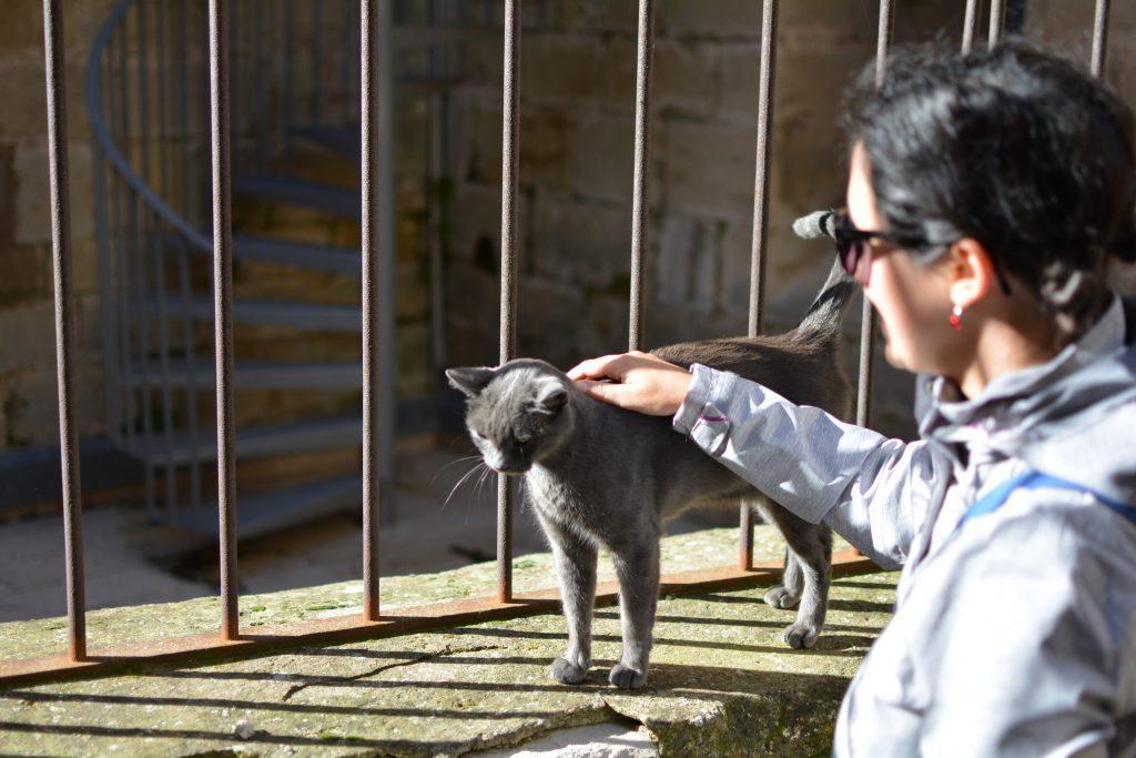 gattini nel paesino di Vallbona de les Monges