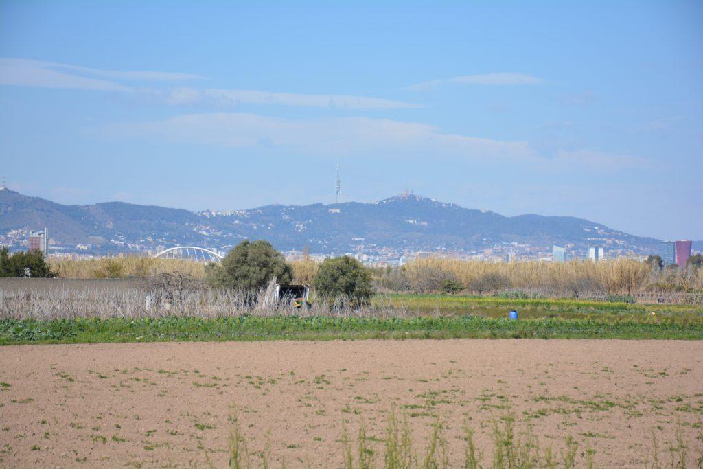 Parco naturale del Delta del Llobregat