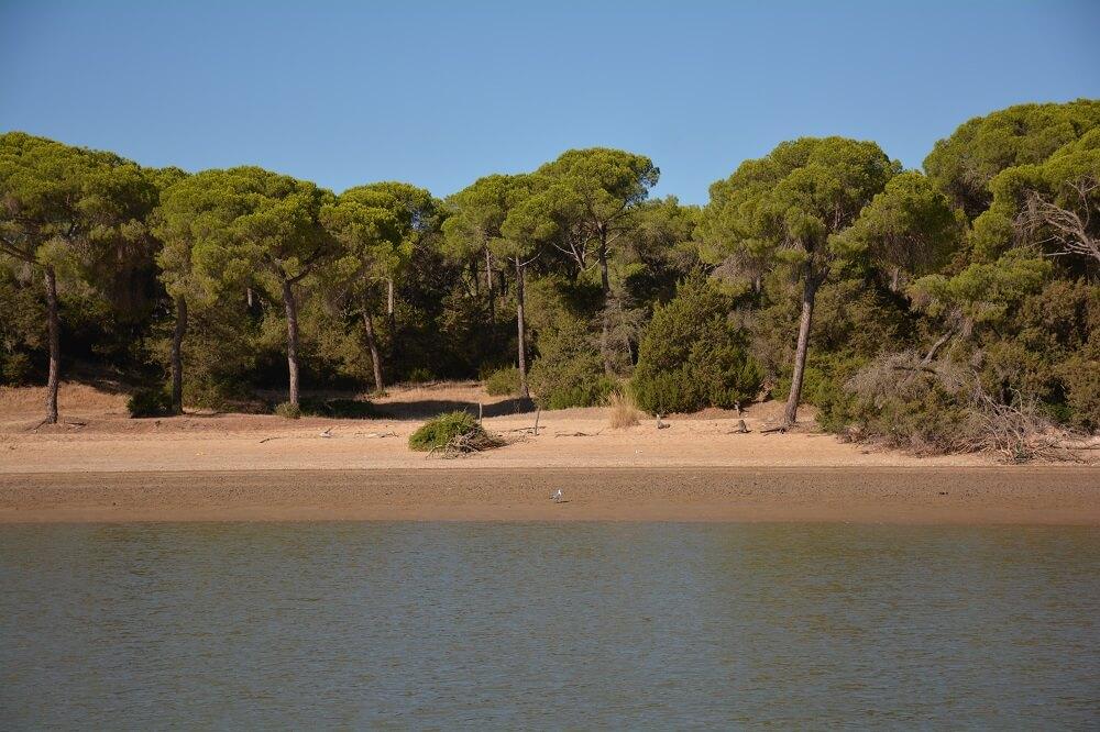 parco nazionale di Doñana