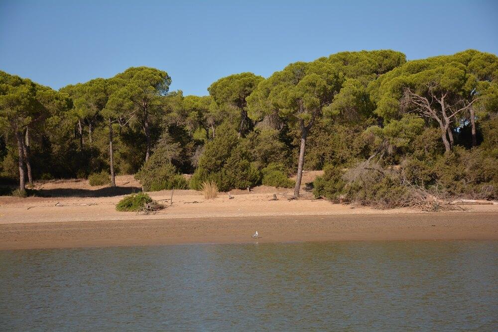 costa del parco di doñana